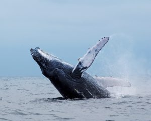 Whale watching-iStock