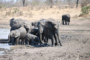 Elephants-Kruger-Thomas Stauch-7