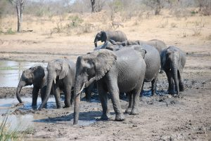 Elephants-Kruger-Thomas Stauch-8