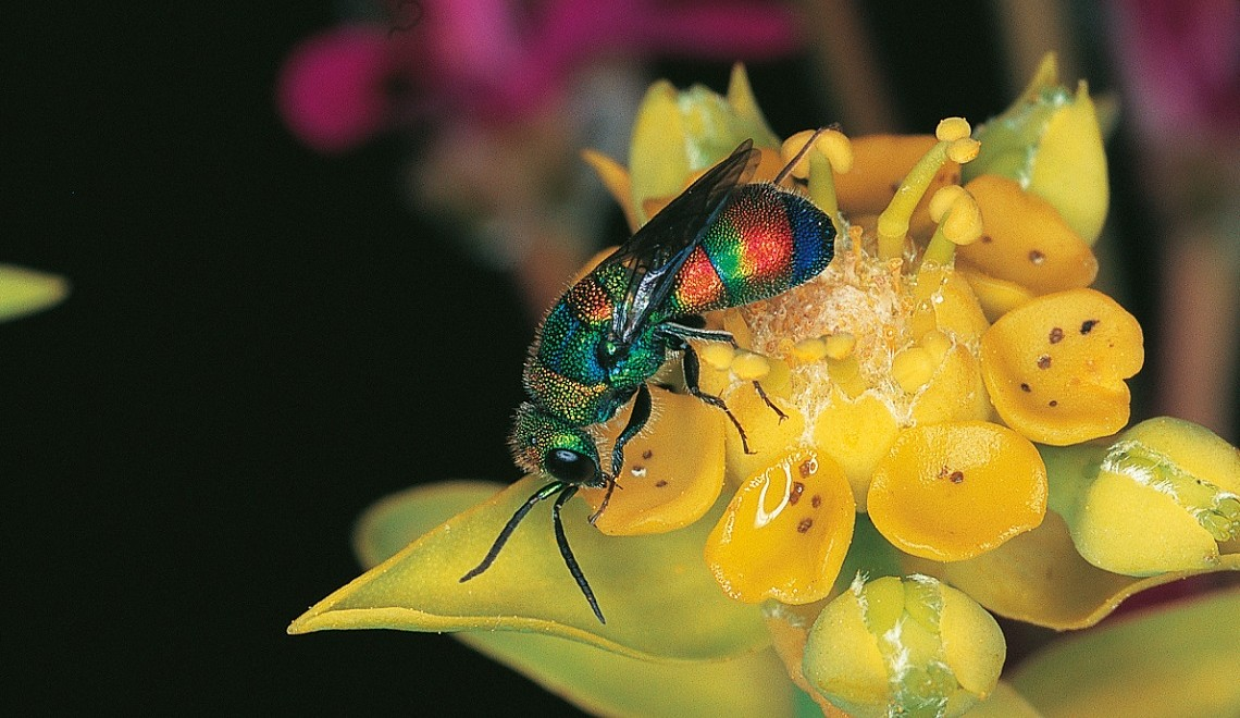 Learn more about the world of insects