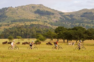 Mountain-bike alongside plains game at Mlilwane Wildlife Sanctuary.