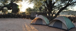 Camping in Kgalagadi by Kate Collins