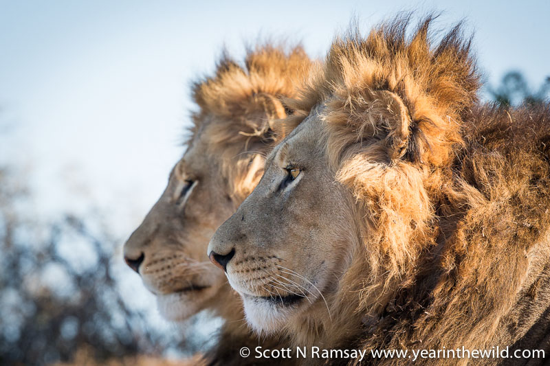 Photo highlights from Addo