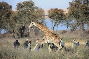 Giraffe research-fitting-Court UFS