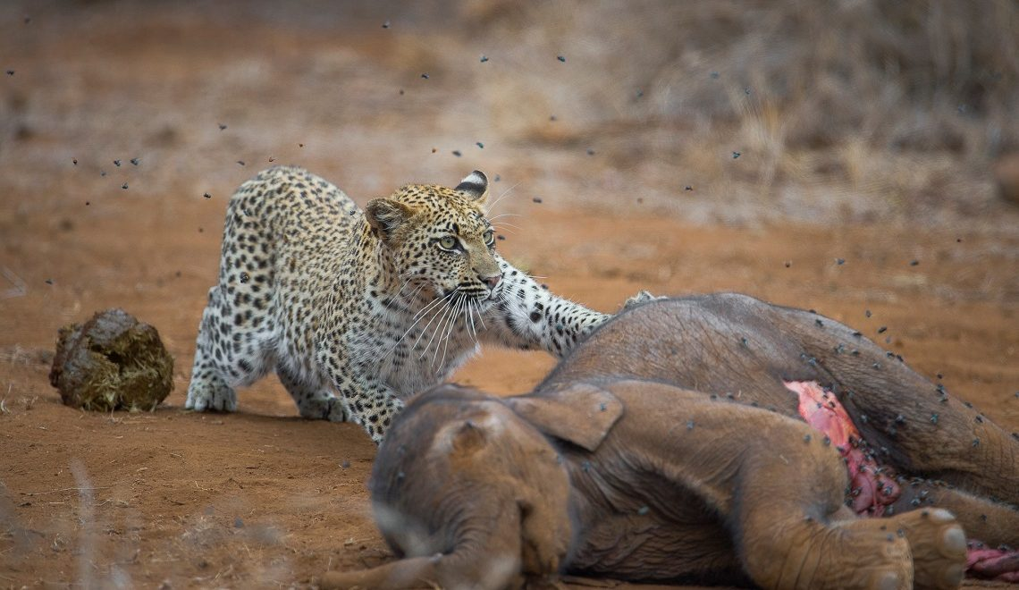 Wildlife Photographer of the Year: Young finalist shares his vision
