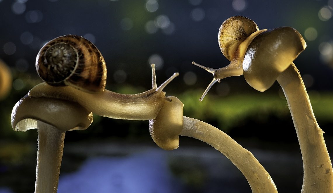 Macro photography-Marcus Jooste-Vincent the snail-3