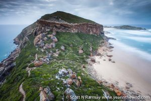 Robberg Nature Reserve is an elevated peninsula, offering great views.