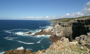 De Hoop Nature Reserve's Whale Trail Only three hours' drive from Cape Town awaits an unforgettable five-night hiking experience. Stretching over 55 kilometres from Potberg to Koppie Alleen, the trail promises ample panoramic views, a wide variety of fynbos, protea species that grow nowhere else in the world, and the opportunity to spot the critically endangered Cape vulture. For many the highlight is day three's coastal stretch of 7.8km, which offers the chance to scan the waters for those magical whales. Find out more about the Whale Trail's accommodation, rules and regulations. Click here for a detailed map. Picture by Gilly Louw