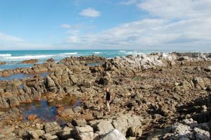 Take your time to examine life in the rock pools. Picture by Joachim Huber, from Creative Commons