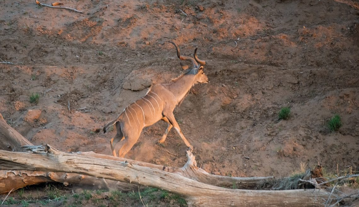 A lesson in kudu karate