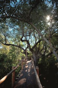 Tree-top walk along the Limpopo River.
