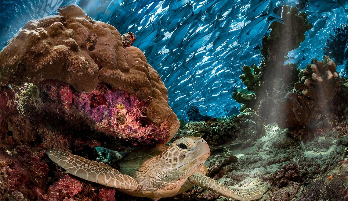 Underwater photography: SA winner shares his tips