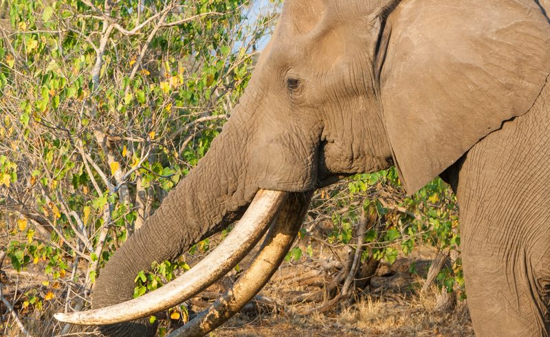 How to stay safe when watching elephants