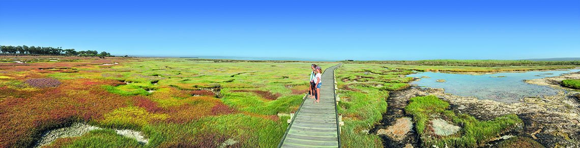 Panoramic view of the Langebaan Lagoon salt marshes.