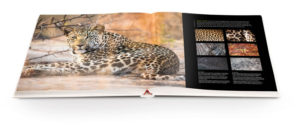 packshots-book-spread-kruger