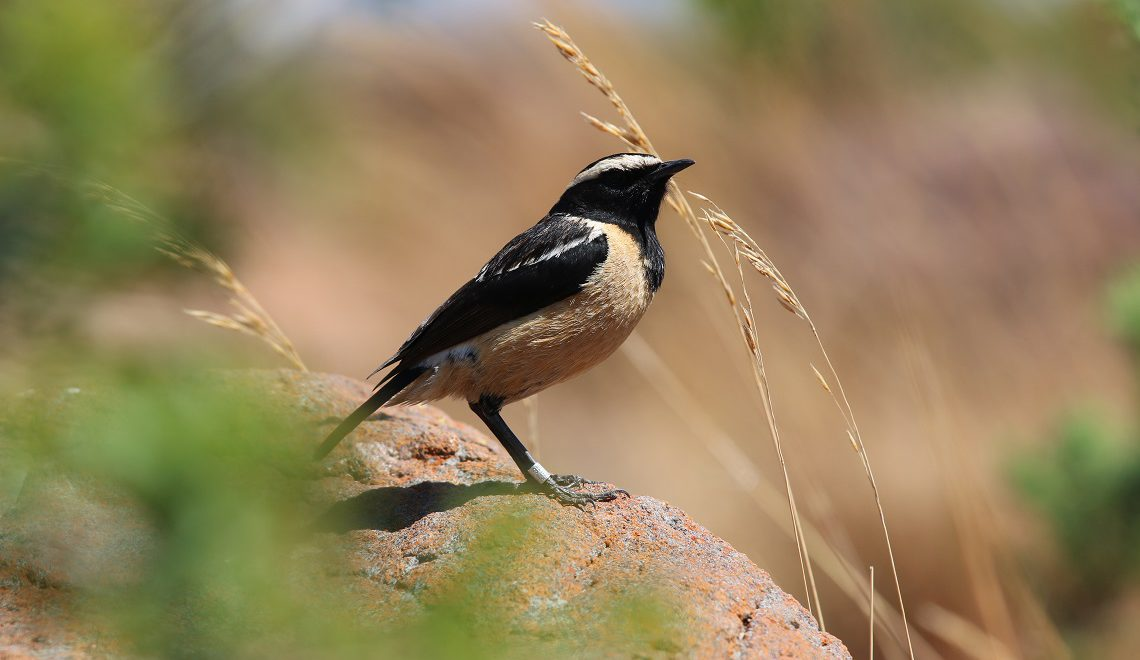 4-6 Nov: Marakele Birding at Bontle