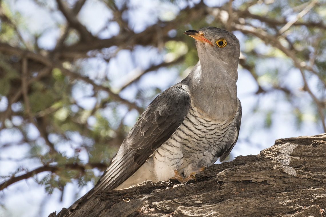 kgalagadi-honeymoon-davide-gaglio-landscape-at-sunset-cuckoo
