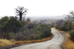 kruger-self-drive-routes-roads-and-ratings-court-heinrich-van-den-berg