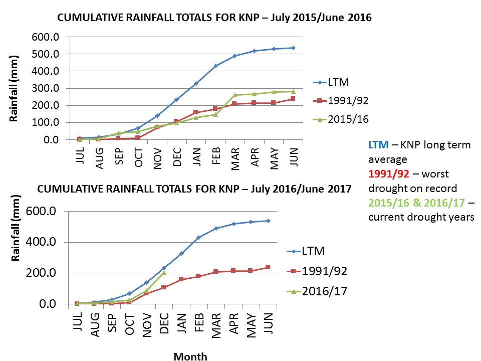 The Kruger National Park has been monitoring and recording rainfall regularly. In both graphs the drought conditions of 2015/2016 (top) and current rainfall data of 2016/2017 (bottom) is compared to the perceived worst drought in Kruger's history (1991/1992). Slide courtesy of SANParks