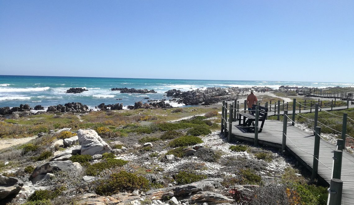 Top 5 things to do in Agulhas National Park