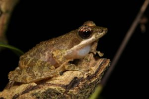 Kloof frog-Leap Day for Frogs-Endangered Wildlife Trust
