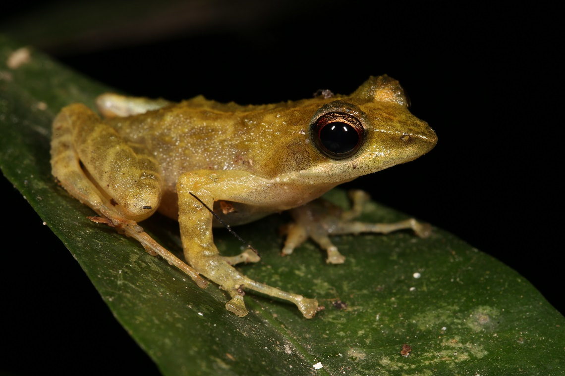 Leapfrog No Leap Day For Frogs Wild Card