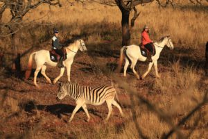 Chubeka-horse-trails-Big-Game-Parks