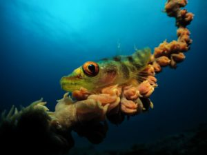 Underwater Photographer of the Year 2017-Mozambique-Jenny Stromvoll
