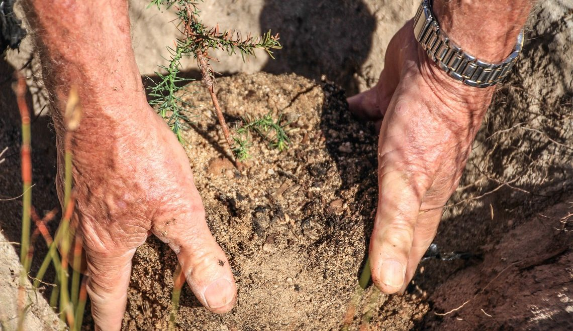 Cederberg tree planting: Have spade, will travel