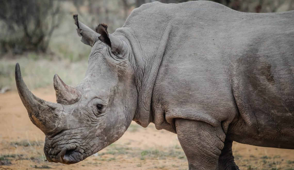 "Talk: ""Putting rhino poachers behind bars"""