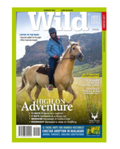 WILD 39 feature cover