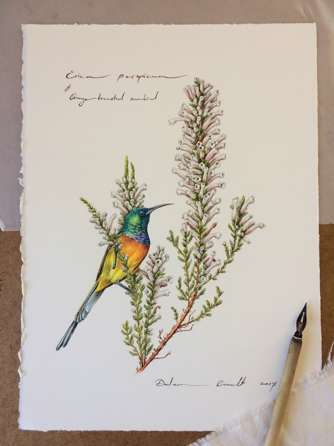 Wild botany illustrations-Daleen Roodt-5-min