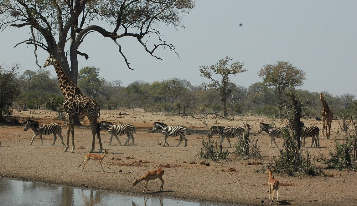 After the drought: What is the future for Kruger's waterholes?