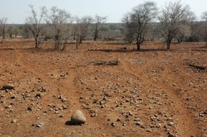 The drought was most severe in the central and southern parts of the Kruger National Park.