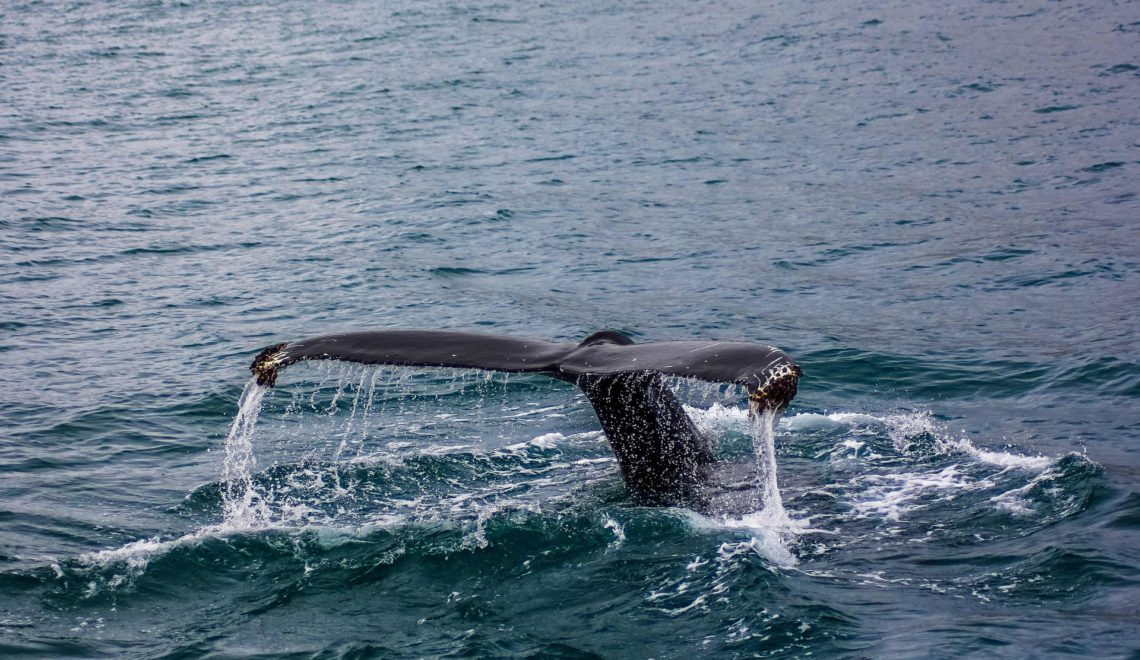 When gentle giants visit: best whale watching spots