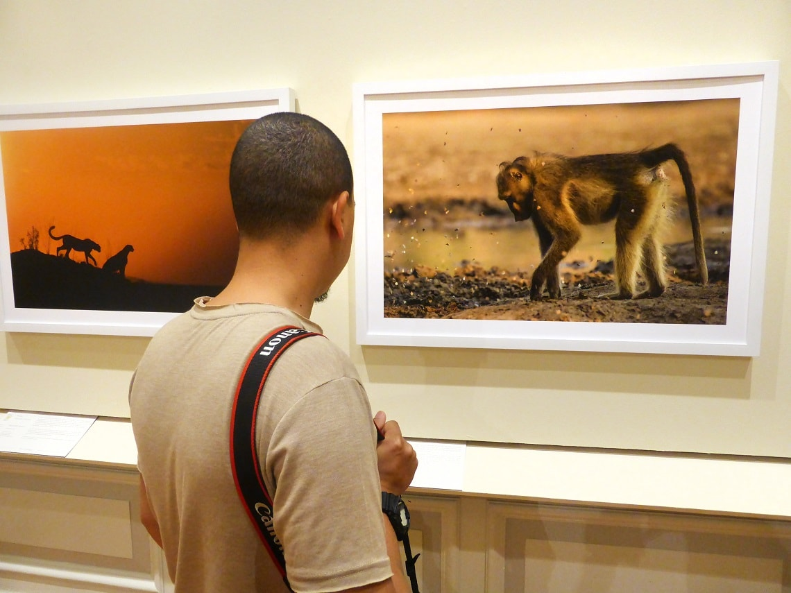 Natures Best Photography Africa-Iziko Museum-Arnold Ras-min