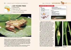 Frogs of Southern Africa-inside-3-min