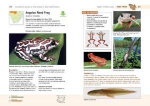 Frogs of Southern Africa-inside-4-min