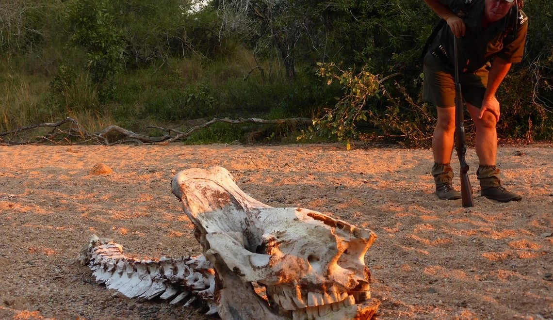 WATCH: Inside Kruger's anti-poaching campaign