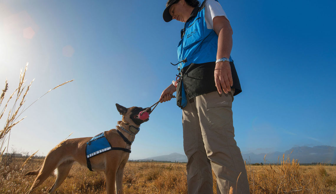 28 February 2019 talk: How a conservation detection dog is saving tortoises